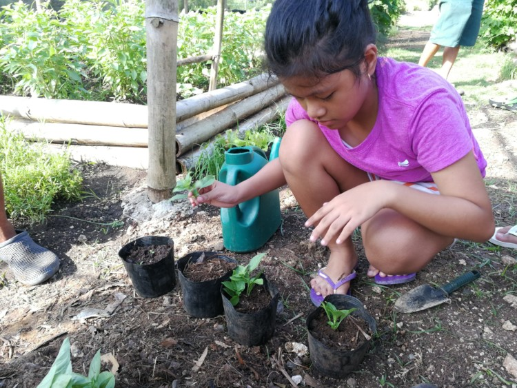 Organic Gardening at Bluewater Panglao