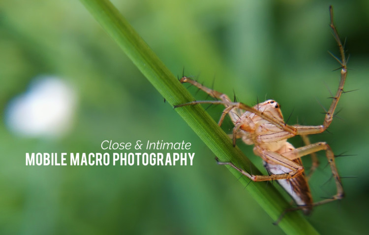Macro Photograpy with Huawei P10