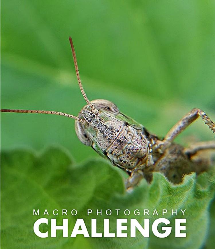 Huawei-Sugbo-Macro-Photography-Challenge