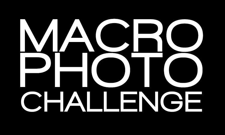 Huawei Sugbo Macro Photography Challenge
