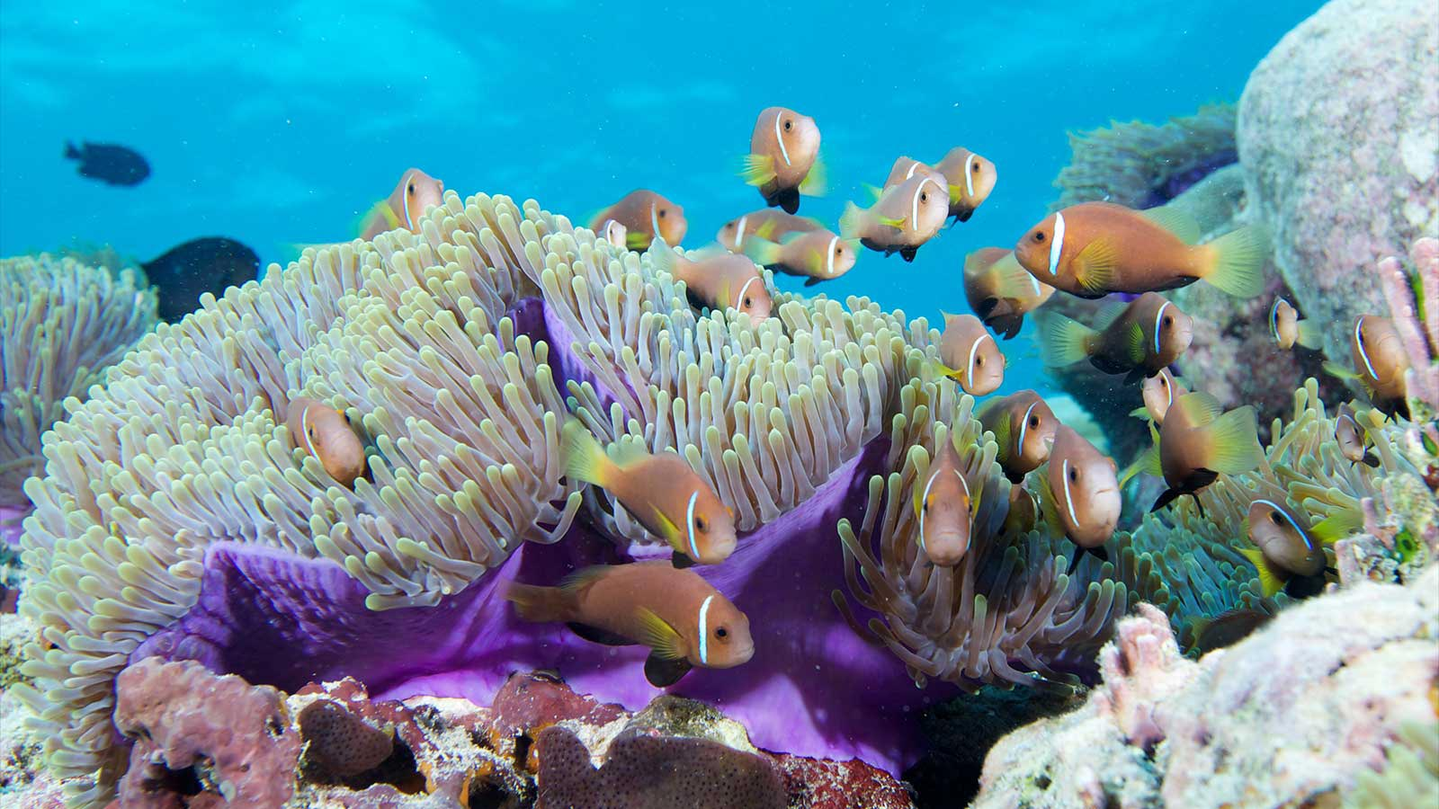 Four Top Tips for Snorkeling Beginners in Mauritius
